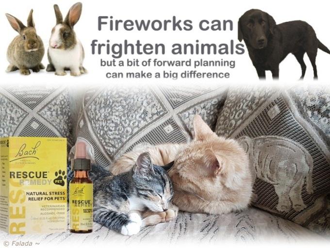 Pim&Raya-RescueFireworks